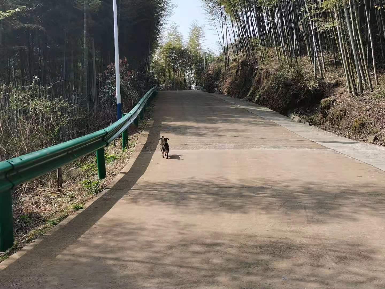 狗陪我们上山